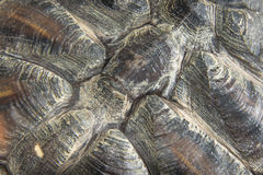 Turtle Shell. Background and rough texture of red ear slider turtle shell stock image