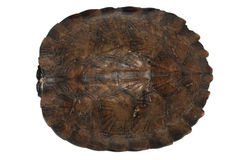 Turtle shell Stock Photo