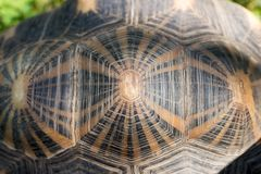 Turtle shell from above. Pattern and background stock photography