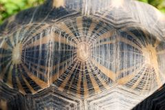 Turtle shell from above. Pattern and background royalty free stock image