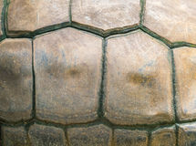 Turtle shell as background Stock Images