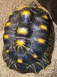 Turtle shell turtle close up royalty free stock photos