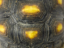Turtle shell. Close up of turtle shell Stock Photography