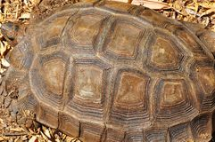 Turtle Shell Defined. Giant Turtles Shell Detailed in close-up stock photography