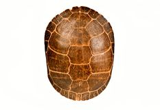 Turtle shell, isolated. Antique turtle shell, isolated on white stock photo
