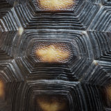 Turtle shell pattern texture. Animal turtle shell pattern texture stock photos