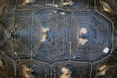 Turtle shell texture. Turtle shell background texture macro. Selective focus stock image