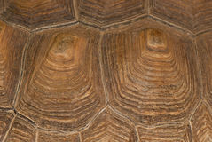 Turtle shell texture Stock Photos