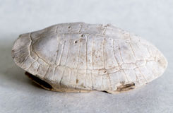 Turtle shell Royalty Free Stock Images