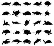 Turtle silhouettes set. On white background Royalty Free Stock Photos