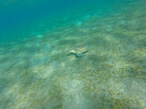 Turtle sitting on the sea bottom. underwater shot stock images