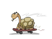 Turtle on skateboard Stock Images