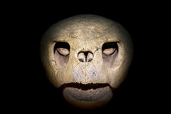 Turtle skull. Close up of a turtle skull isolated on black background Royalty Free Stock Photography