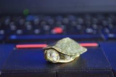 Turtle sleep on  laptop Stock Photo