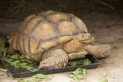 Turtle sleepy Stock Images