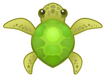 Turtle Small Stock Photography