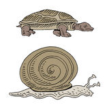 Turtle and Snail Race Royalty Free Stock Photos