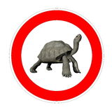 Turtle speed limit Royalty Free Stock Photo