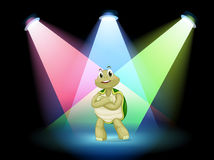 A turtle standing at the stage Royalty Free Stock Photography