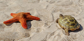 Turtle and starfish on a sand. Royalty Free Stock Image