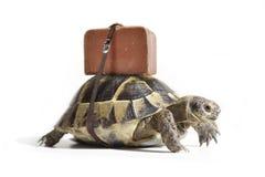 Turtle with suitcase. Turtle with suitcase on a back. Selective Focus Royalty Free Stock Photos