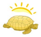 Turtle sun Stock Photos