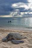 Turtle Sunset. Turtle sunning by North Shore, Oahu, Hawaii Royalty Free Stock Image