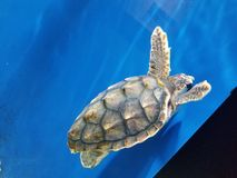 Aquarium. Turtle swim bright royalty free stock photos
