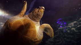 Turtle swimming in fish tank. At the aquarium stock footage