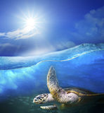 Turtle swimming under clear sea blue water with sun shining on s Stock Photos