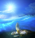 Turtle swimming under clear sea blue water with sun shining on s. Ky above use for ocean nature background royalty free stock photo