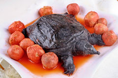 Turtle and taro Stock Image