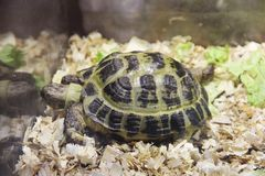Turtle in a terrarium royalty free stock photography