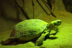 Turtle terrarium Royalty Free Stock Photo
