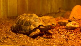 Turtle in the terrarium. At the zoo stock footage