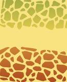 Turtle texture Stock Photography