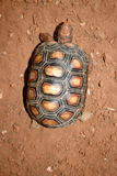 Turtle top view royalty free stock image