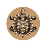 Turtle top view, carapace, crawling, sketch, vector. Black-and-white pattern on a brown background circle Stock Photo