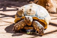 Turtle or tortoise on ground Royalty Free Stock Photos