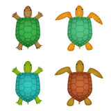 Turtle and tortoise in realistic style, top view Royalty Free Stock Images
