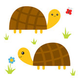 Turtle tortoise set. Cute cartoon character family couple. Butterfly, daisy flower, grass. Pet animal collection. Education cards Royalty Free Stock Photos