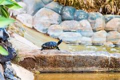 Turtle or tortoise on stone Stock Photos