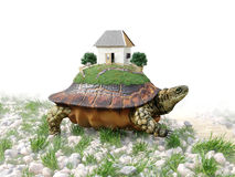 Turtle with toy house from paper real estate business concept Stock Photos