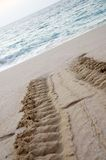 Turtle track Royalty Free Stock Images