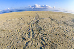 Turtle tracks on a beach, Heron Island, Queensland, Australia Stock Photography