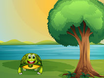 A turtle beside a tree at the river Royalty Free Stock Image