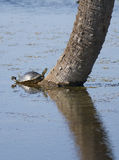 Turtle on tree trunk in lake Stock Photos