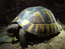 Turtle. Turte in the dark Royalty Free Stock Photography