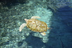 Turtle turtles life reptiles marinelifemammals Royalty Free Stock Photography
