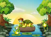 A turtle and the two frogs at the river Royalty Free Stock Photo